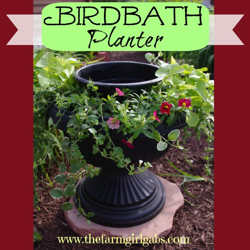 Creating Our First Vegetable Garden Advice Please: How To Make A Birdbath Planter
