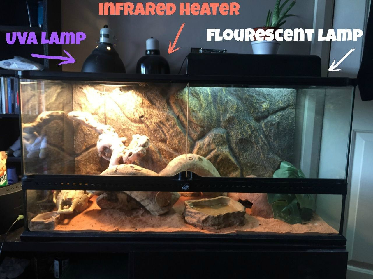 Learn how to setup your very own reptile terrarium with
