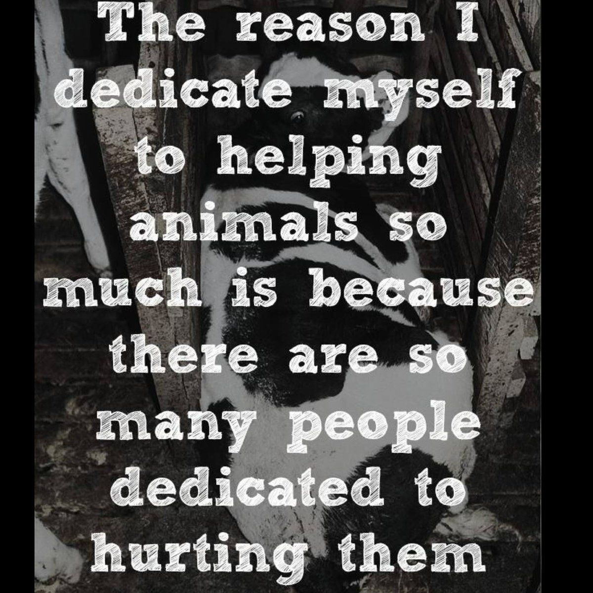 Animal Rights Quotes Vegan Vibes On  Vegans Animal And Animal Cruelty