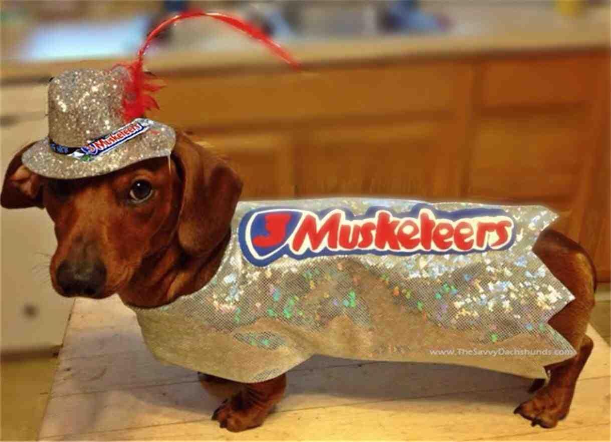Weiner Dog Halloween Costumes.Trick Or Treat Halloweenie Costume Pet Halloween Costumes Dog Halloween Costumes Dog Halloween