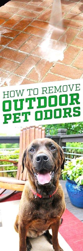 Dog Training Food Aggression Dog Training Vancouver Wa Wendy