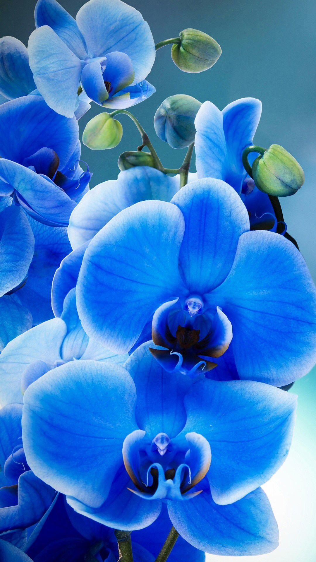 Very Pretty Flowers Plants Etc Pinterest Flowers Flower