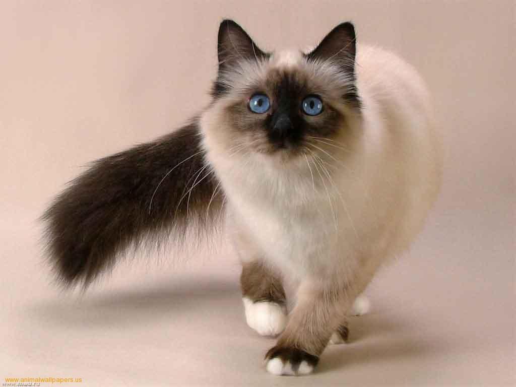 AdKeTo EjayElle: Jom Kenal Baka Kucing | flores y ga | Pinterest ...