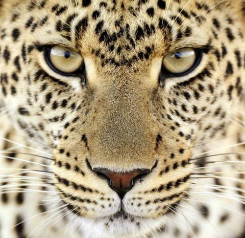 Cheetah Animals Wild Pet Birds Cute Animals