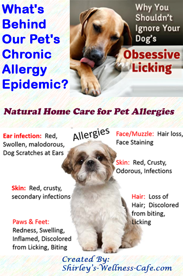 Pin On Wise Health For Animals And Pets