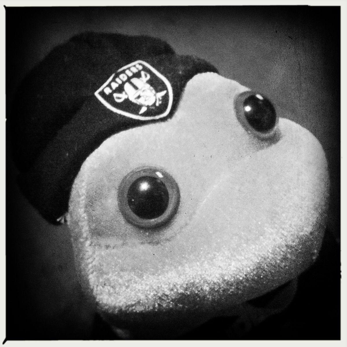 #OaklandRaiders Frog