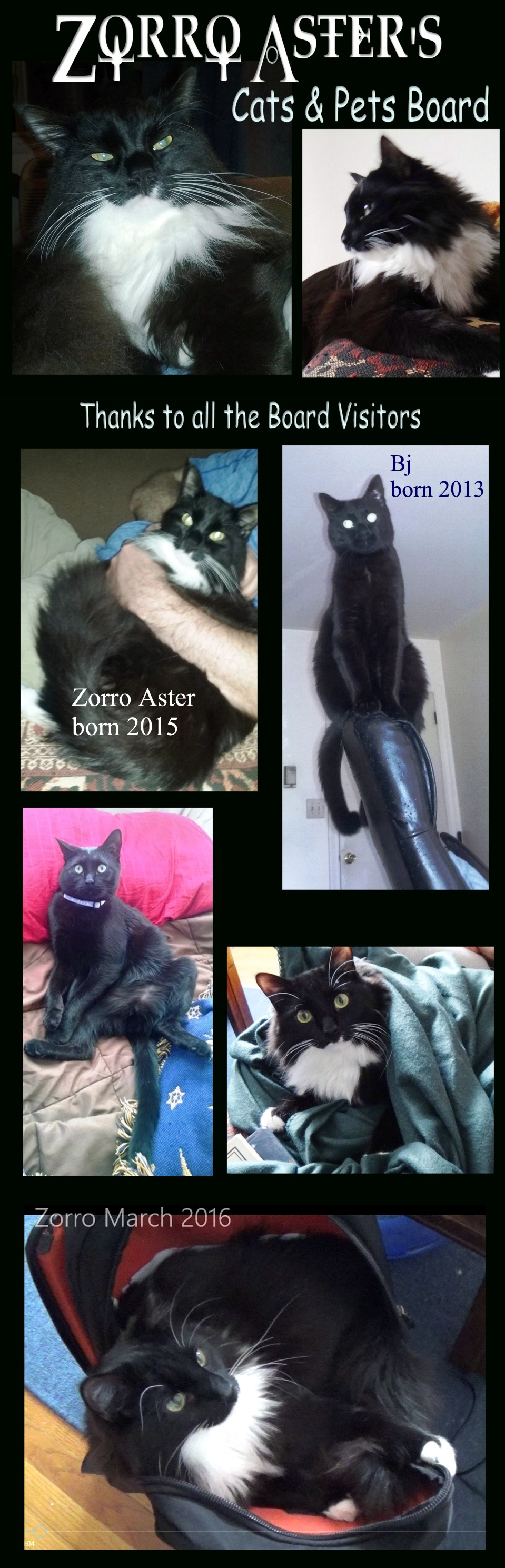 Pin On Zorro Aster S Cat Pets