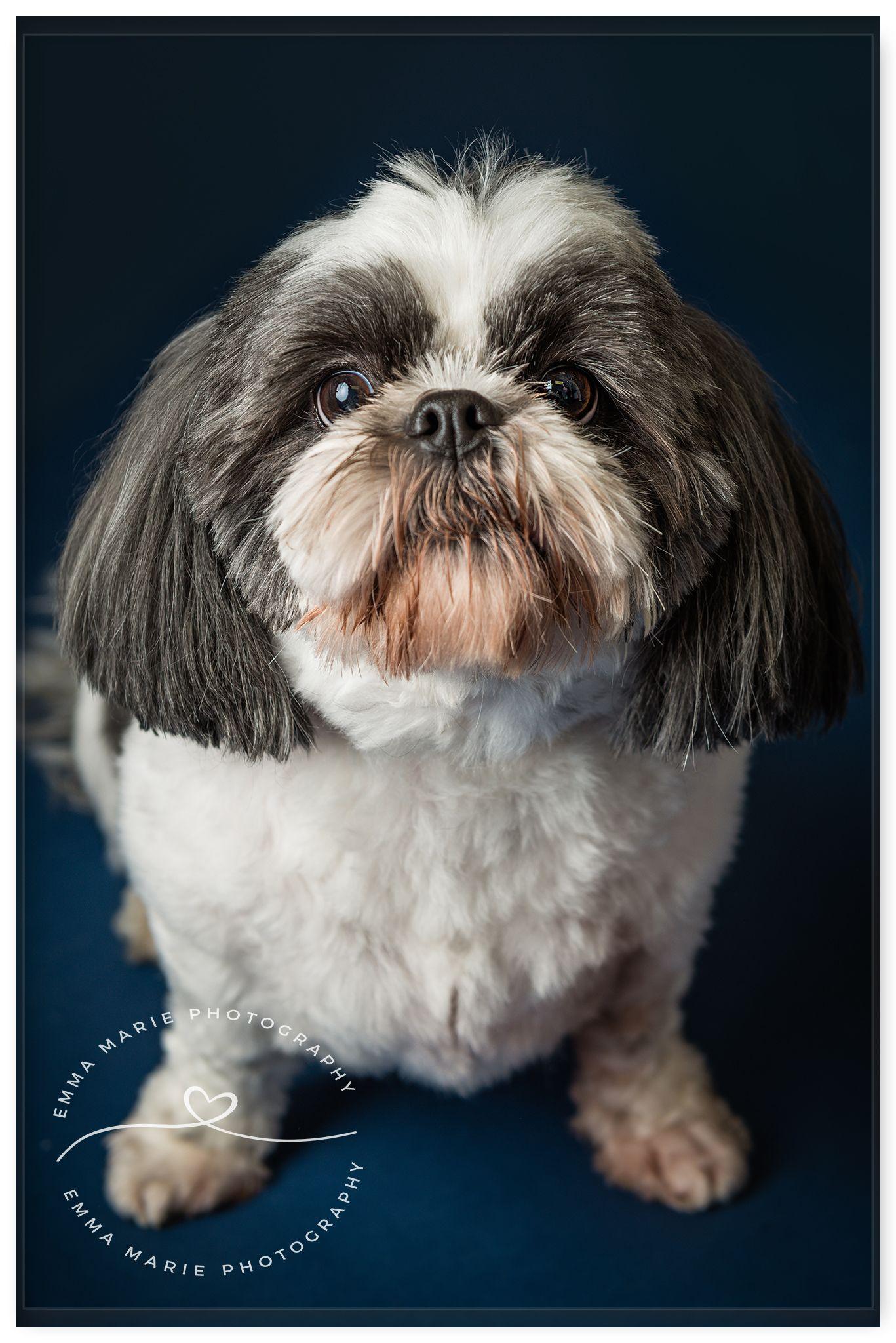 Fine Art Pet Portrait Photography Emma Marie Photography Pet