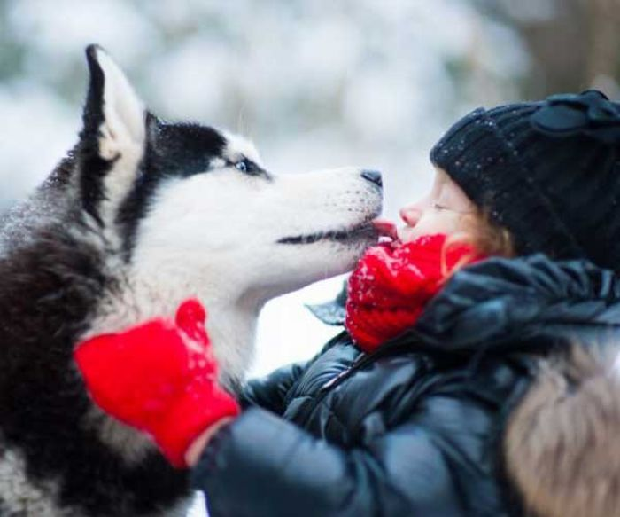 Mascotalia Center Protege A Tus Mascotas Del Frio Animals Girl