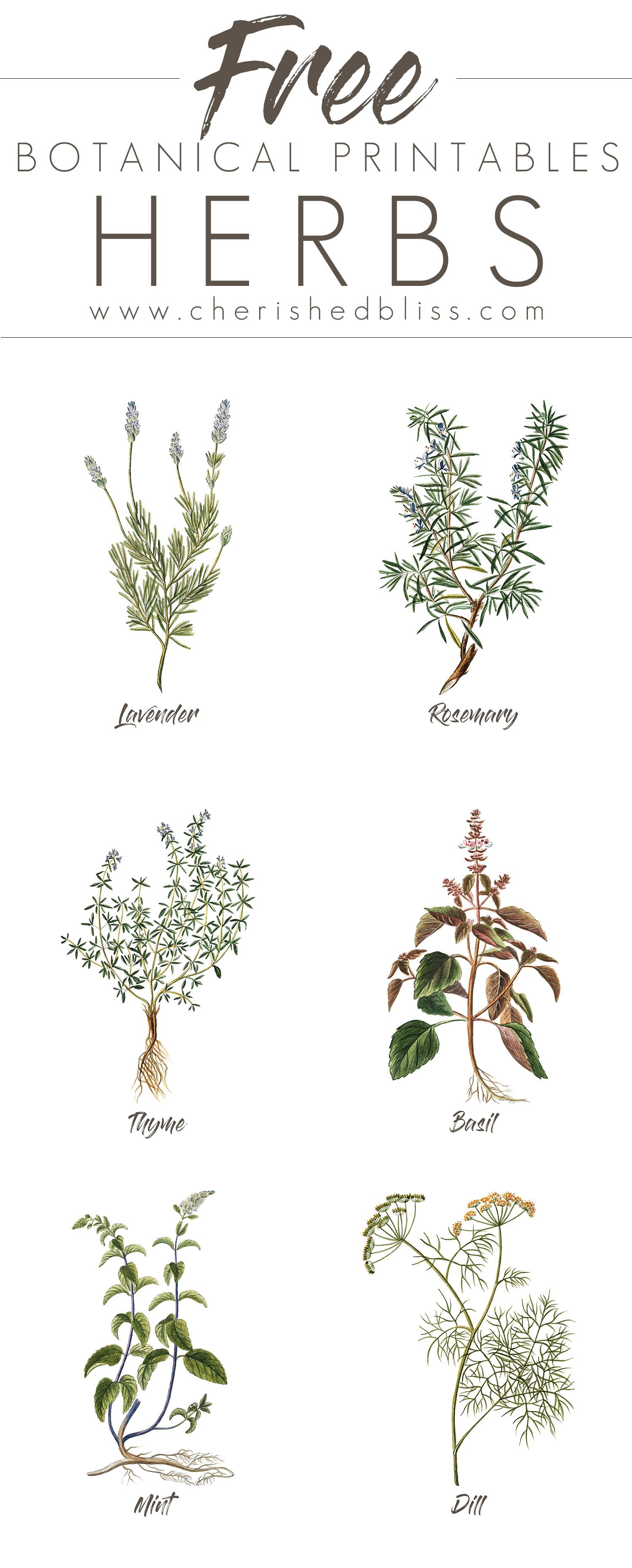 Free Set Of 6 Spring Herb Printables