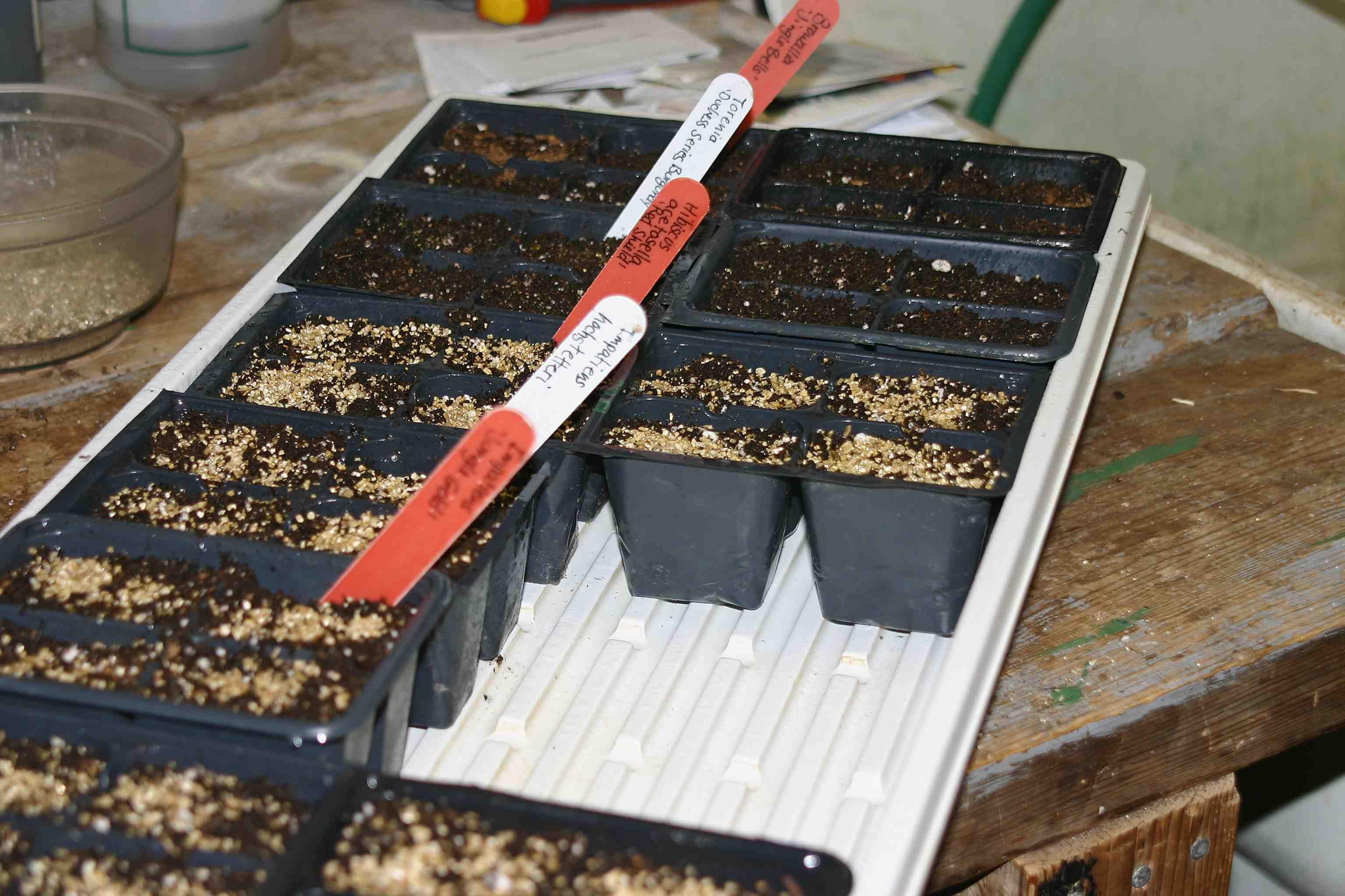 Le temps des semis ...pas si vite Le jardinier paresseux