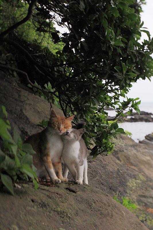 Honeymooners @Mono Coello