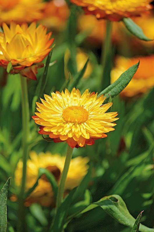 Pin On Najpiekniejsze Kwiaty