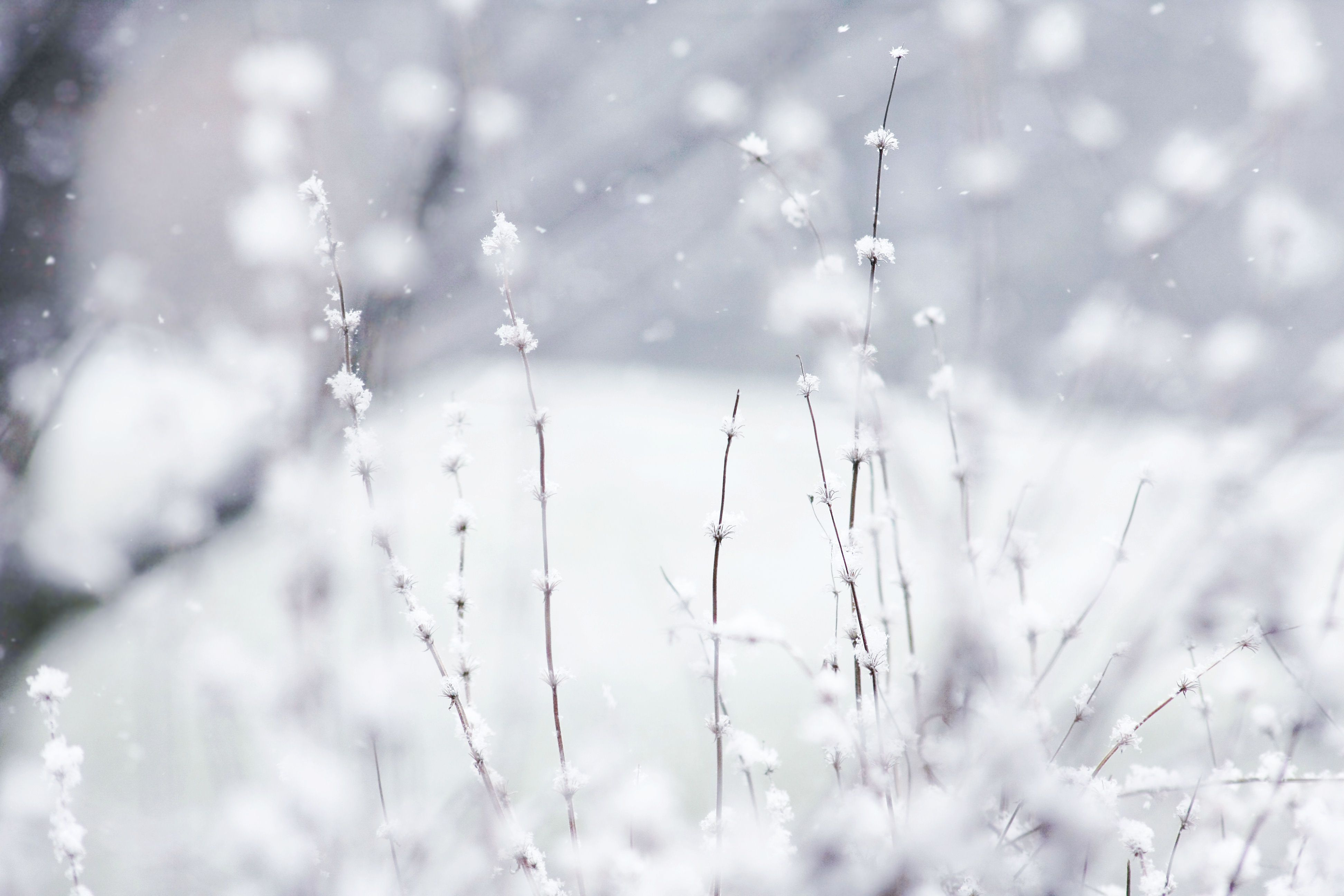 free winter backgrounds winter wallpaper winter snow winter love winter wallpaper winter snow