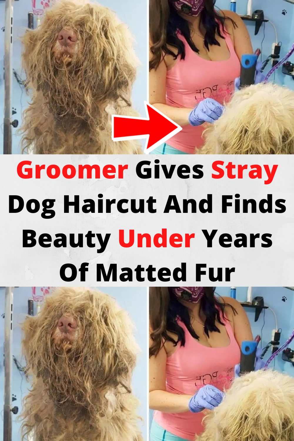 Woman Grooms Animal In Middle Of Night To Find Beautiful Dog Under Matted Fur In 2020 Crazy Funny Memes Funny Prank Videos Dog Haircuts