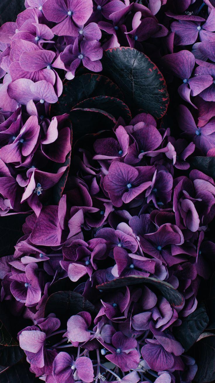 Vintage floral iPhone Wallpaper Collection Purple