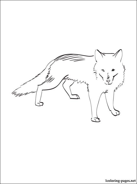 arctic fox polar fox coloring page for free coloring pages - Baby Arctic Animals Coloring Pages