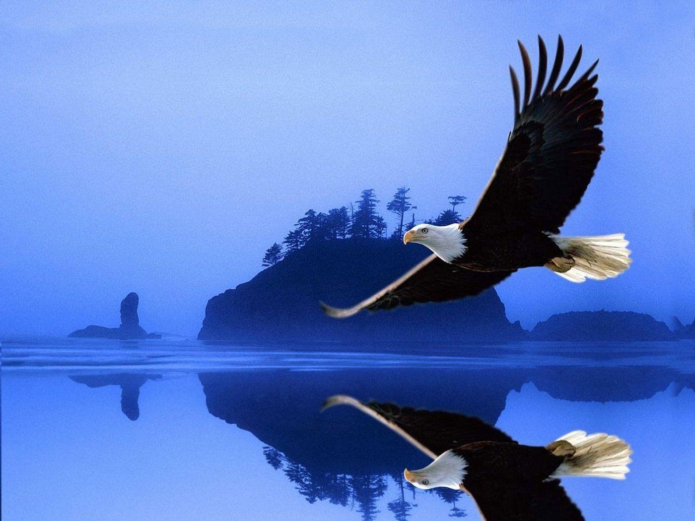 Cajun Pride Southern Proud Eagle Wallpaper Bald Eagle Eagle Pictures