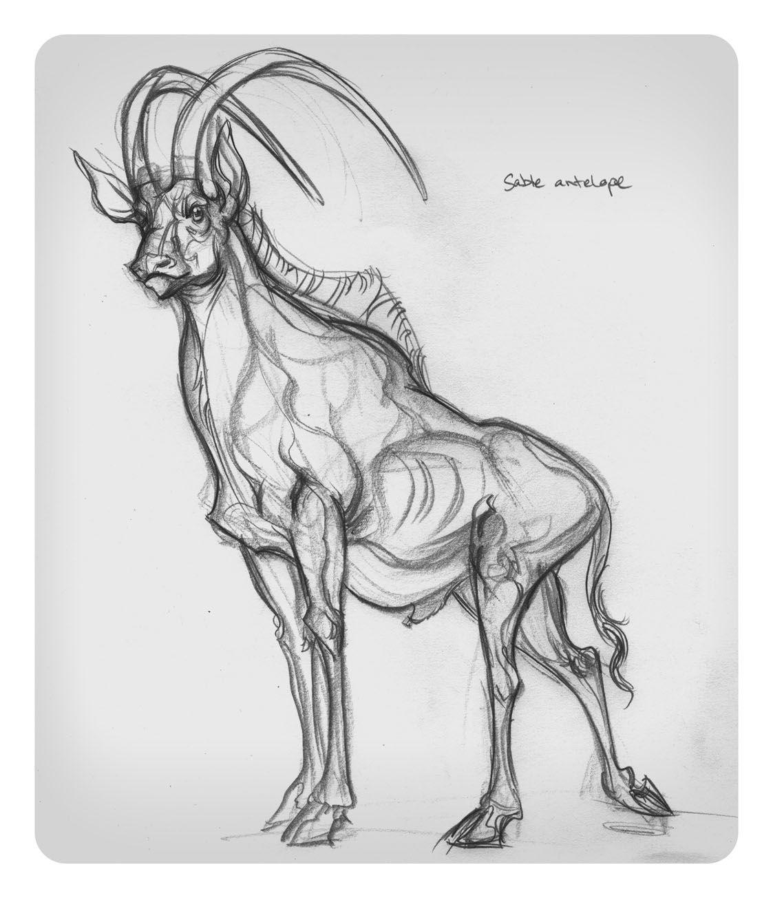Jaw Cooper   Animals - Hayvanlar   Pinterest   Anatomía, Animales y ...