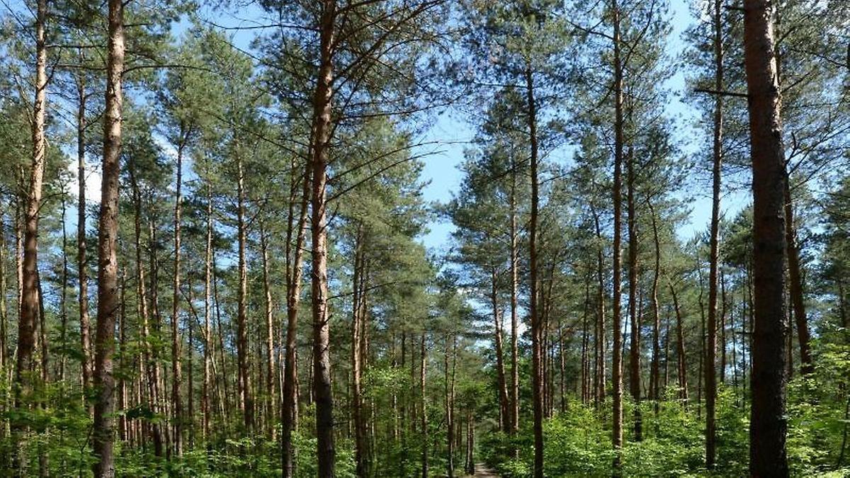 Bäume statt Beton: Was taugt Wald als Geldanlage?