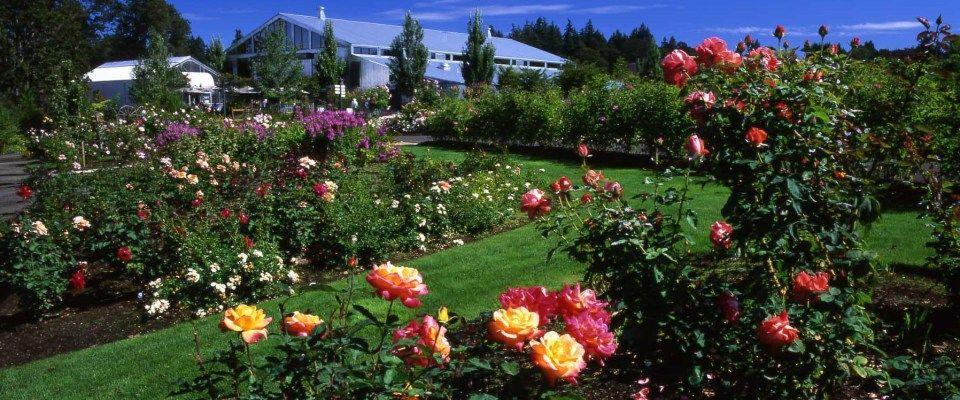 Roses at the Oregon Garden, Silverton | places to go | Pinterest
