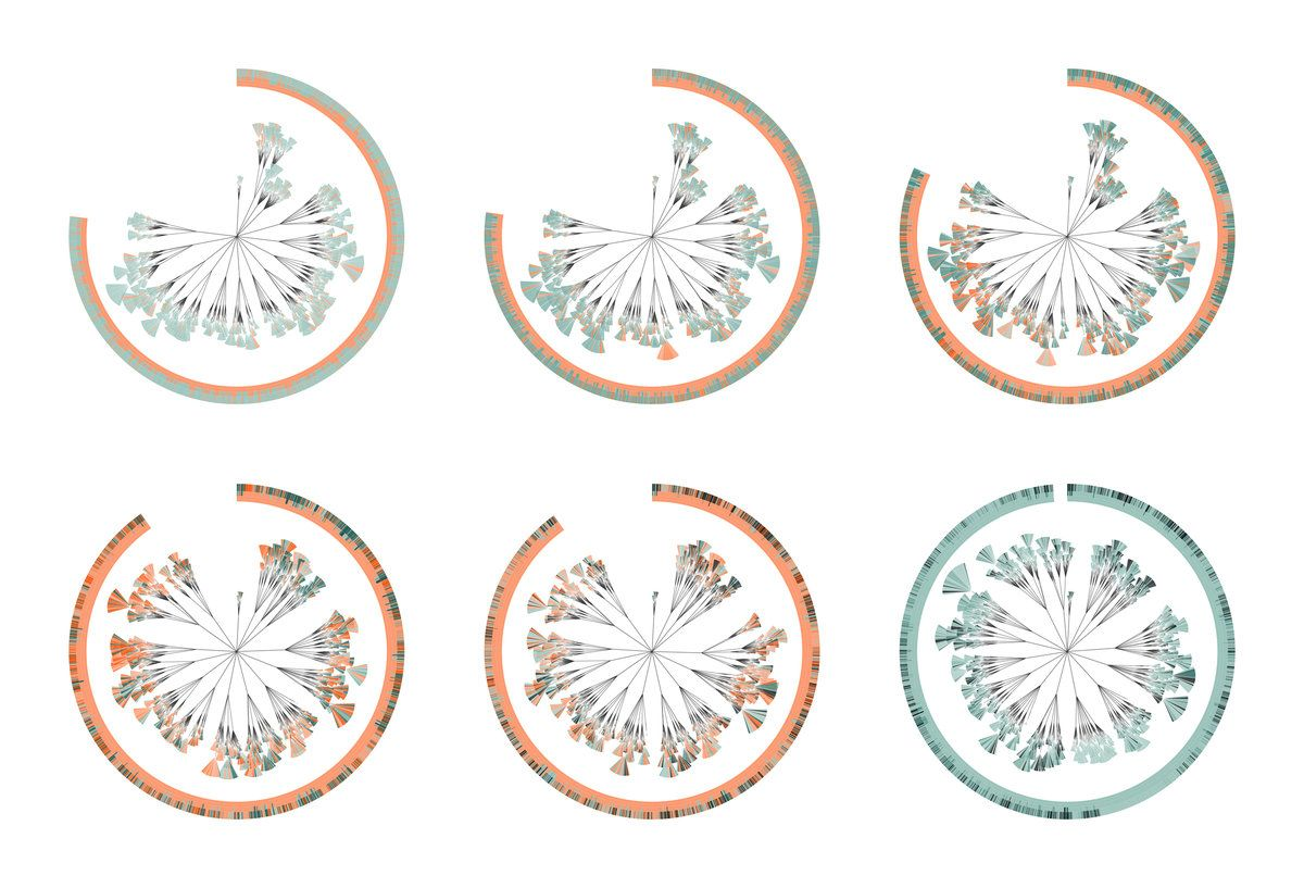 This visual comparison of the six editions of Charles Darwin's On the Origin of Species shows the changes Darwin made to the texts during his lifetime. Using data from online versions of the books, the designers created six wheels, each representing a different edition, with each chapter divided into sub-chapters, paragraphs (represented by a leaf shape), and sentences (represented by a smaller 'leaflet').