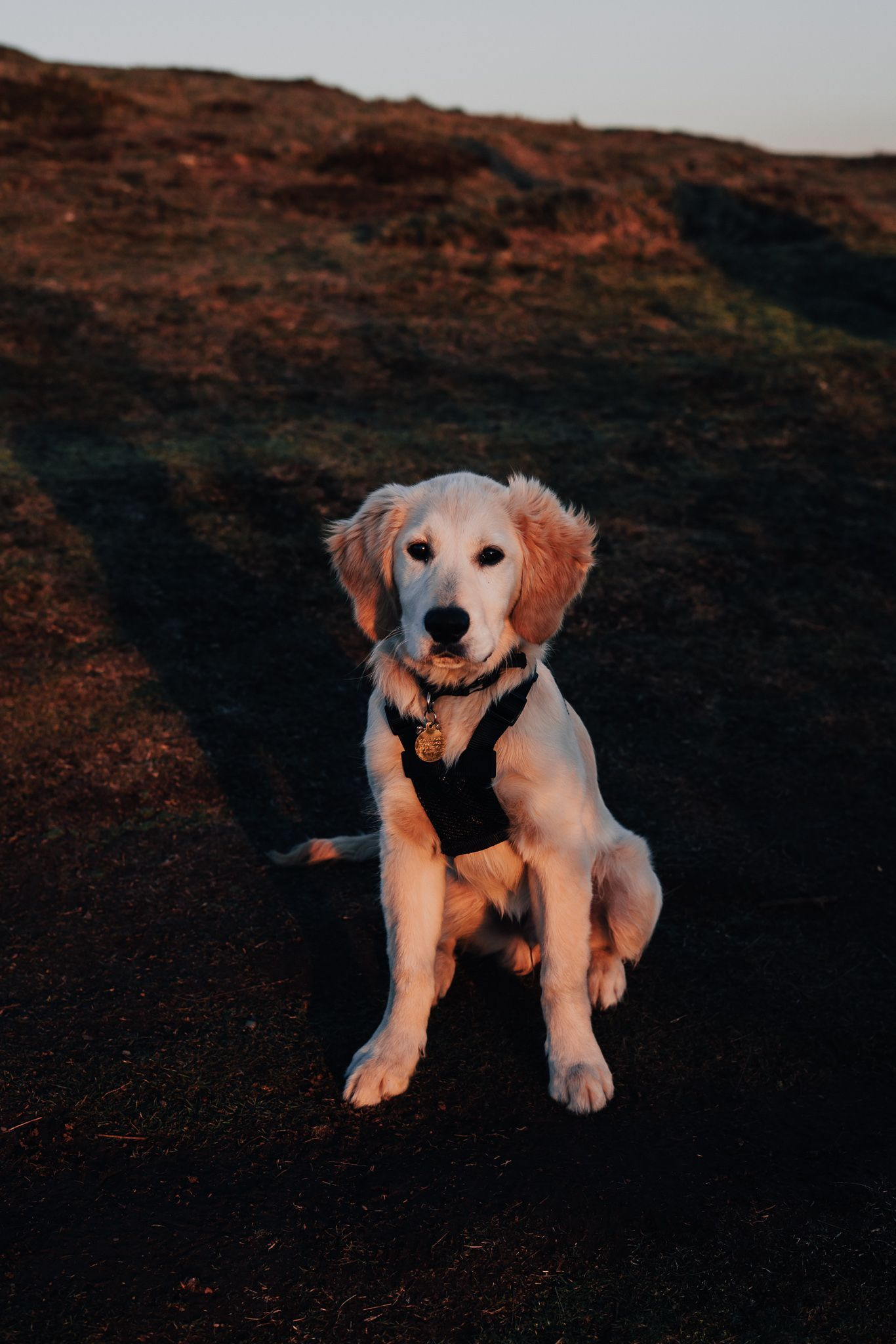 My 5 Month Old Golden Retriever Puppy Oscar Www Transluceo Photography Uk Photographer I Old Golden Retriever Golden Retriever Puppy Golden Retriever