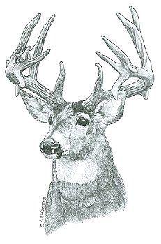 Free Printable Wood Burning Patterns By Sue Walters Deer 2