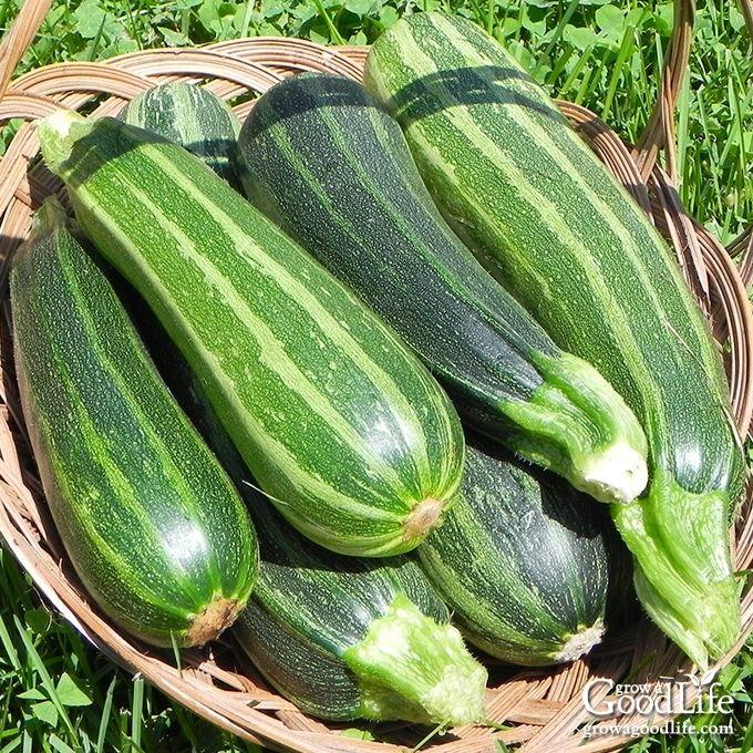 Preserve Zucchini 3 Ways With Images Zucchini 400 x 300