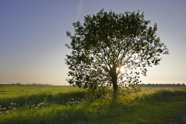 The Celtic tree calendar is based upon thirteen lunar months. Learn about the thirteen tree months, and how they are used in magical workings.