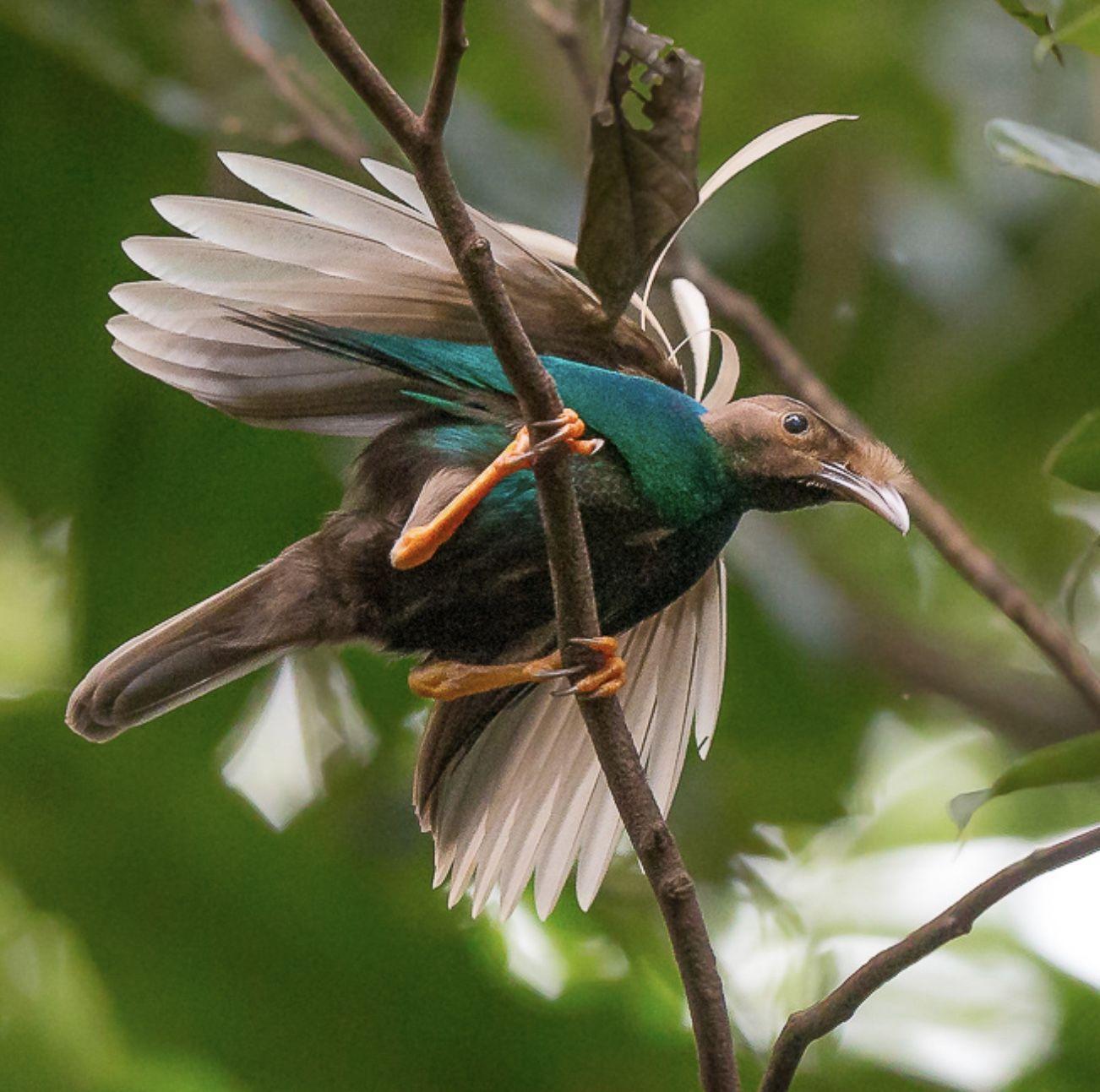 Pin By Rosalva Claudino On Birds Of Paradise Weird Birds Pretty Birds Colorful Birds