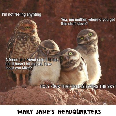 Funny cannabis weed meme, owl meme @ facebook.com/maryjaneshq
