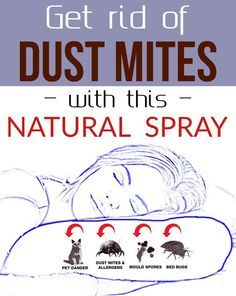 Get Rid Of Dust Mites With This Natural Spray Dust Mites Bites