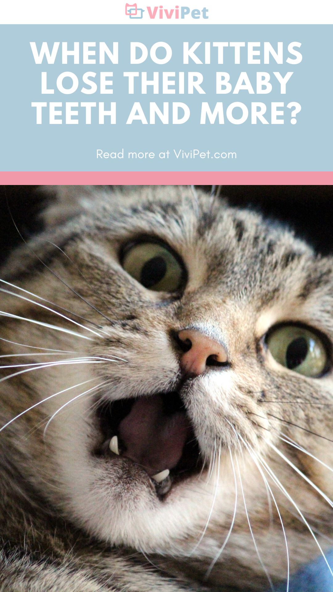 Vivipet When Do Kitten Lose Their Baby Teeth And More In 2020 Baby Teeth Cat Parenting Cat Themed Gifts