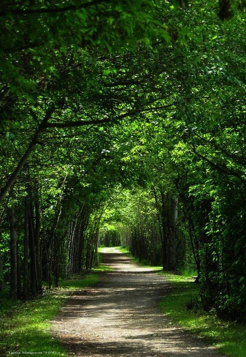 A perfect walkway on a summer's day...