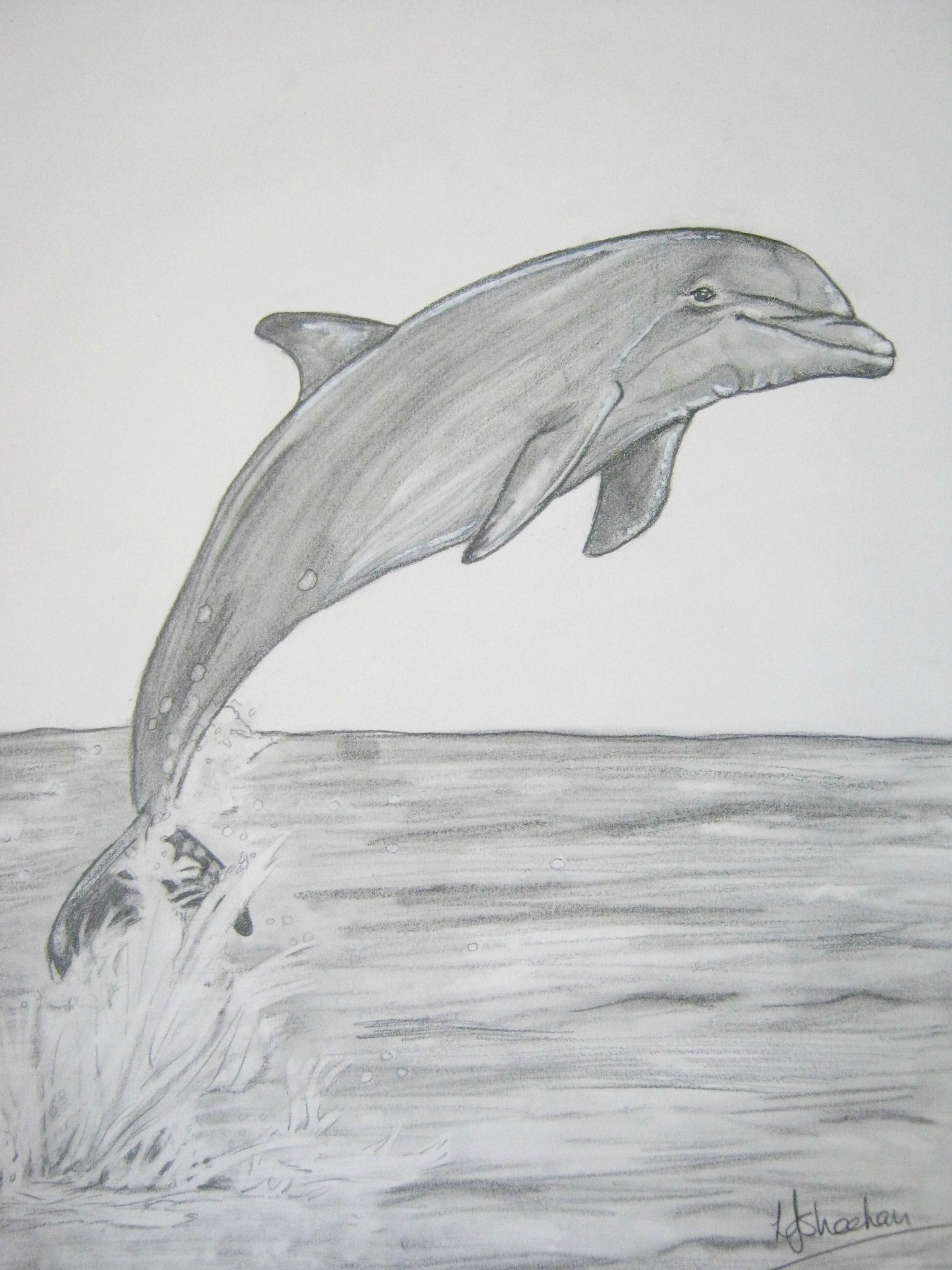 Dolphins Water Drawing Far Away