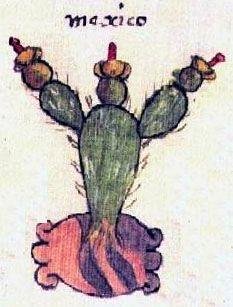 Detail aus dem Codex Osuna das das Symol von Tenochtitlan (Mexico), eine Opuntia, zeigt.