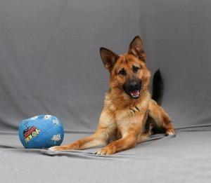 Adoptable Dogs Dogs Adoption