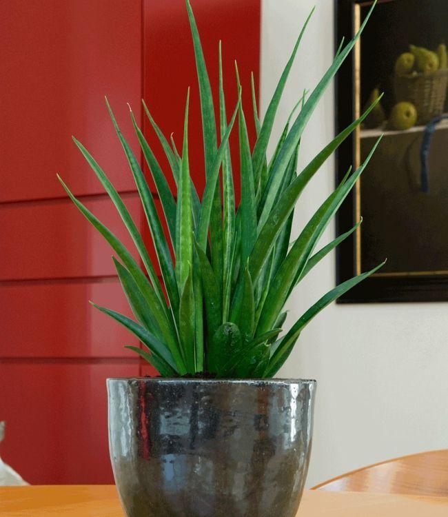 Zimmerpflanzen Modern zimmerpflanzen deco lunges