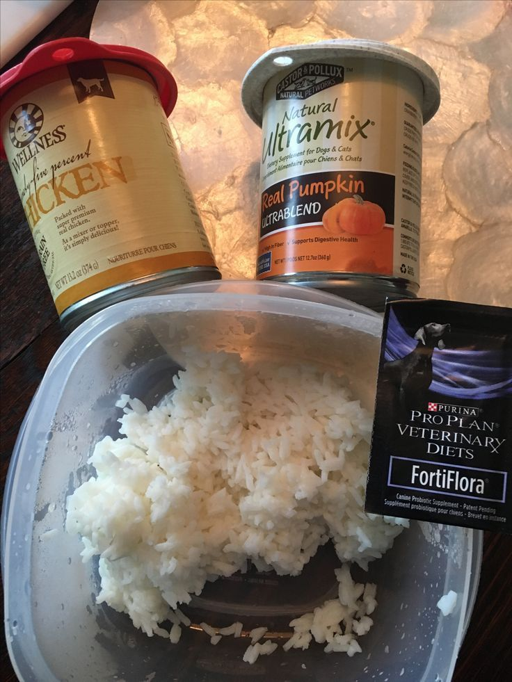 Dog bland diet 1 c cooked rice 14 c each canned pumpkin