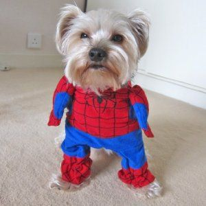 Amazon.com: Alfie Couture Pet Apparel - Superhero Costume Spiderman - Size: XS: Pet Supplies