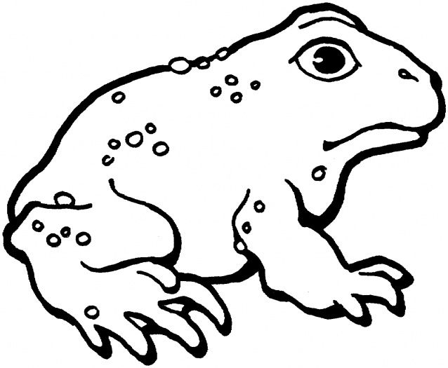 toad coloring pages Google Search Animal coloring