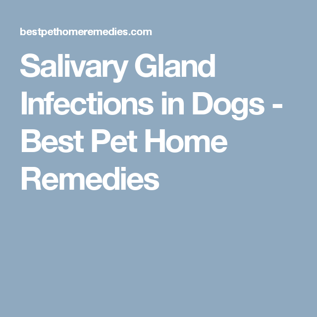 Salivary Gland Infections In Dogs Best Pet Home Remedies Salivary Gland Infection Glands Remedy Salivary Gland