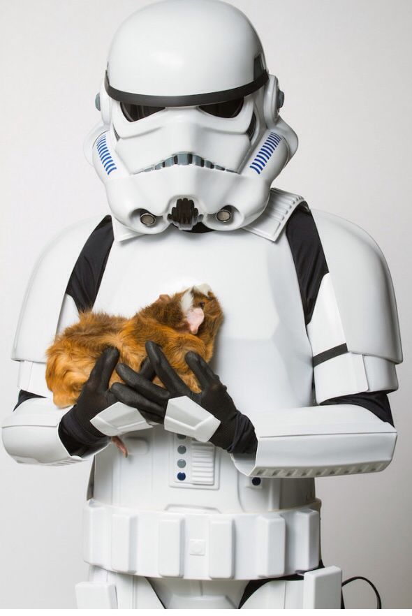Star wars animal rescue