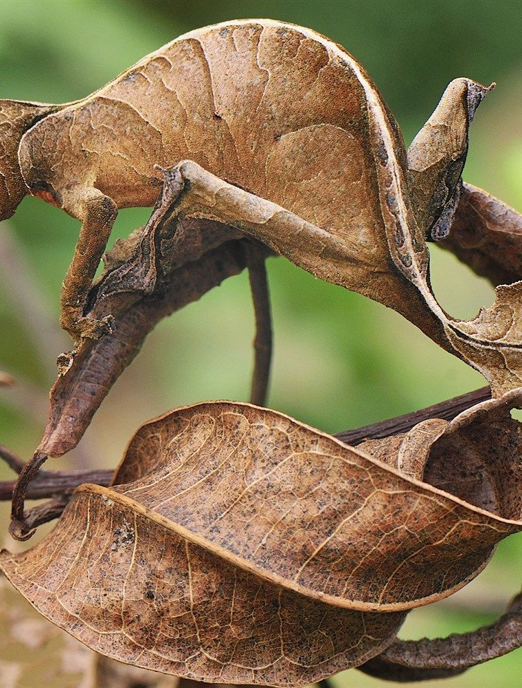 16++ Animals that can camouflage ideas