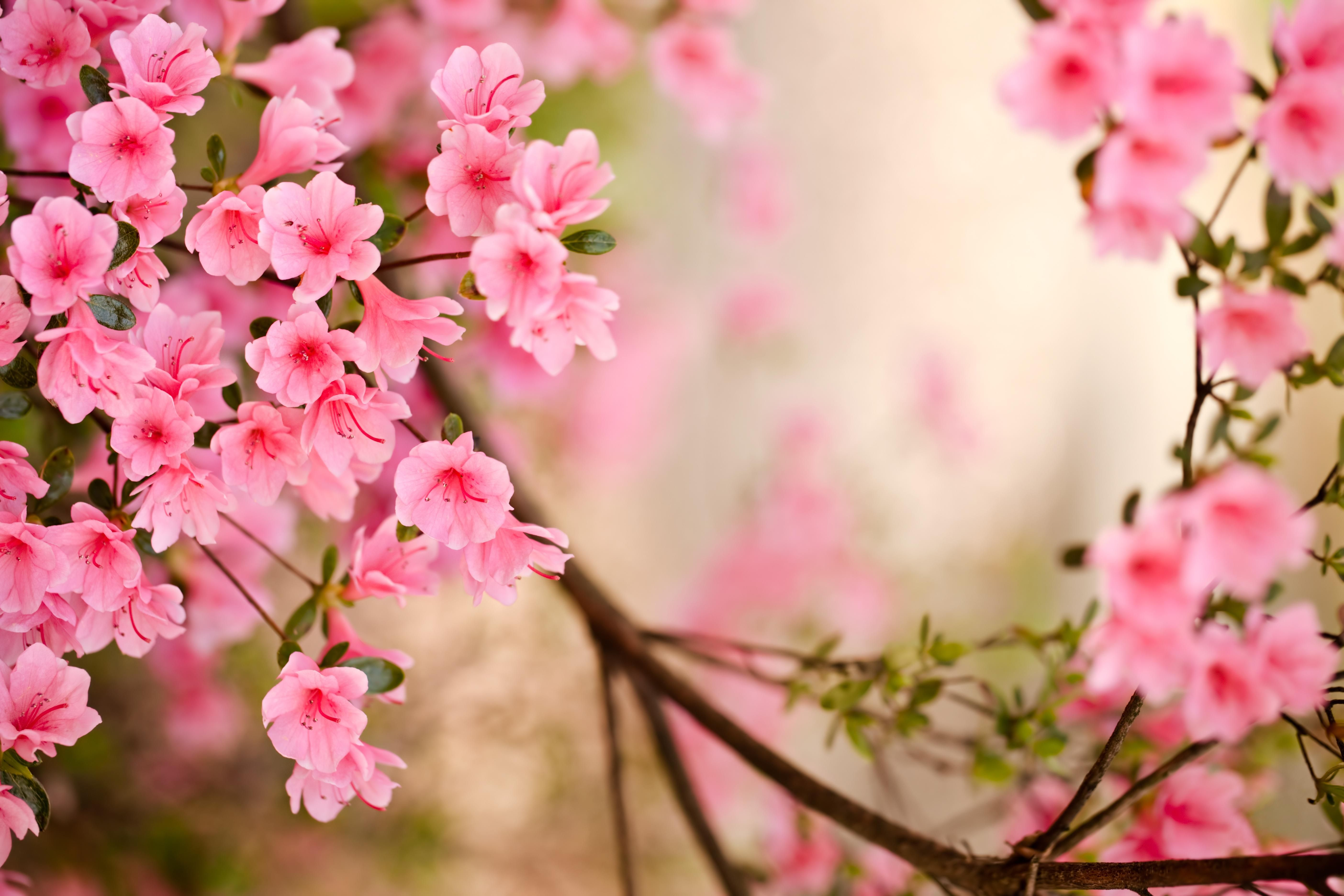 Songs Of Spring With Images Spring Flowers Wallpaper Spring