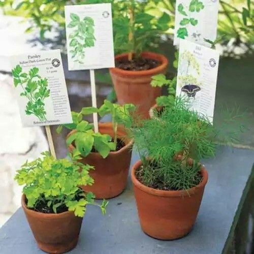 Label your plants with chopsticks