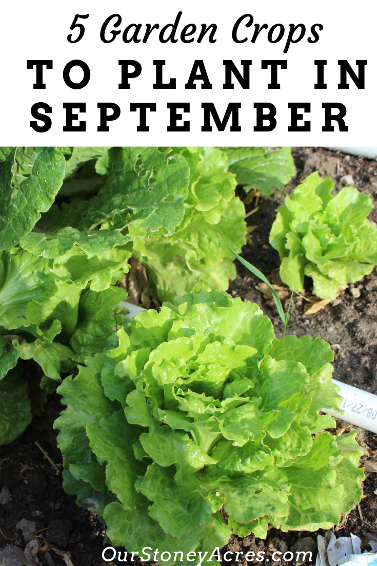 5 Crops you can still plant in September Planting