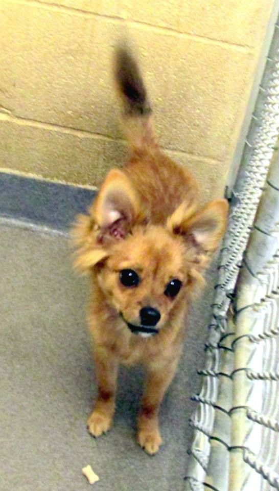 Beaufort County Animal Control 3931 Us 264 Highway E Washington Nc