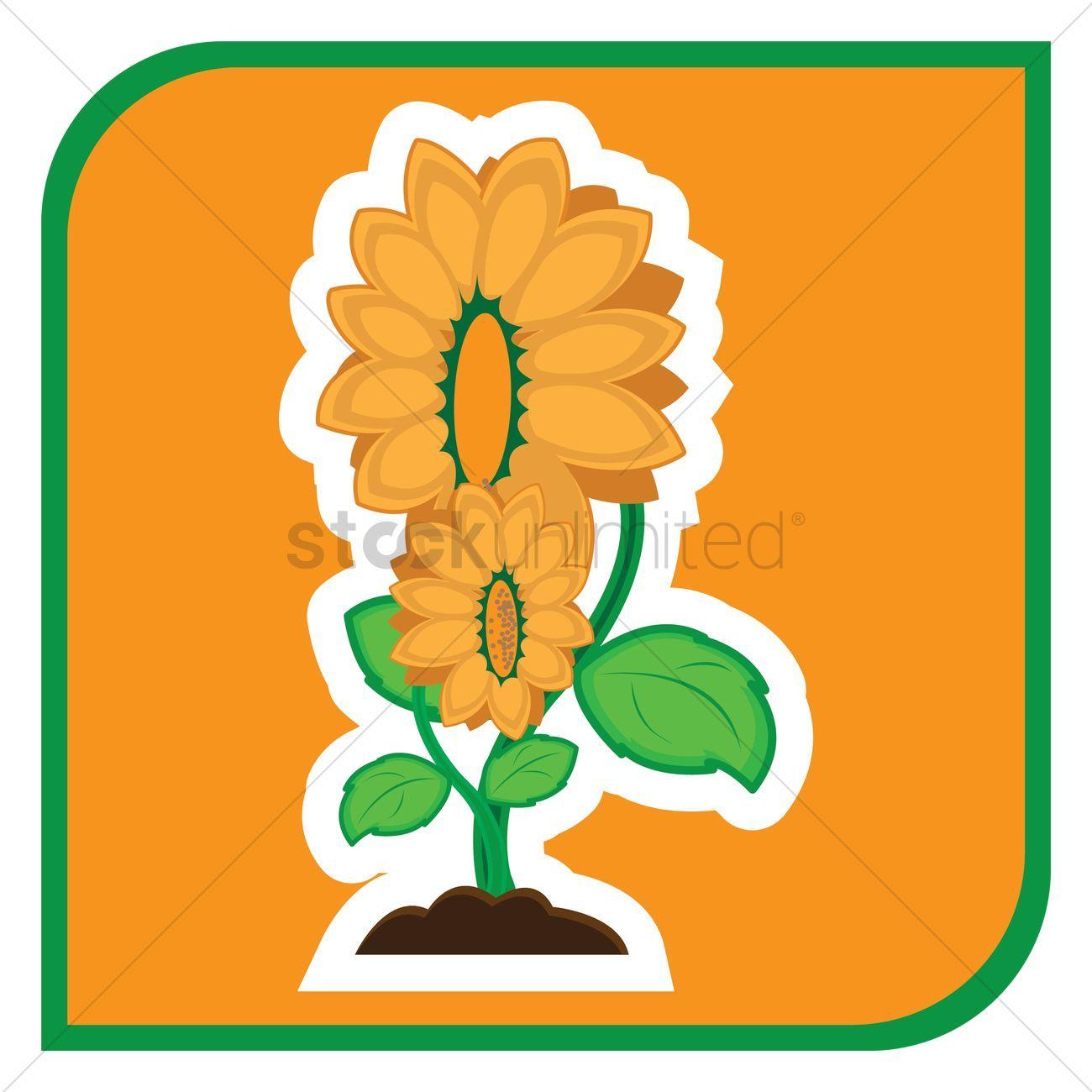 Sunflowers vector illustration